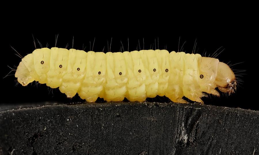 Bugs Image101